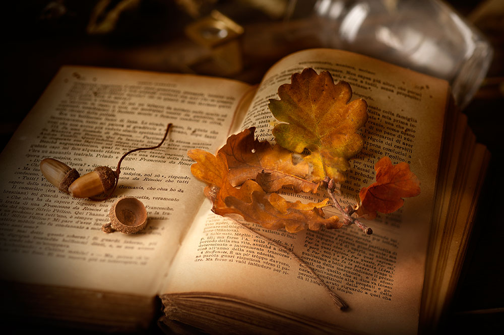 oak-leaves-on-a-book